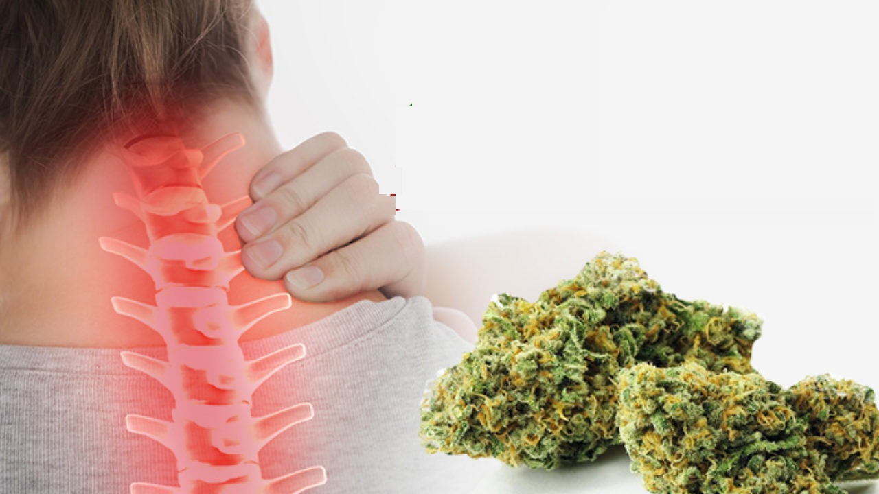 Medical Cannabis for Chronic Pain